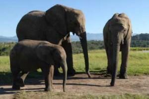 elephant experiences